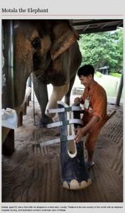 Animal Prosthetics (8 photos) 2