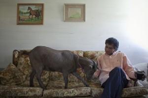 Unusual Pets (18 photos) 2