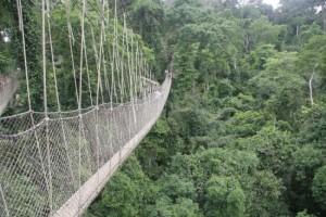 So-called Bridges (40 photos) 28