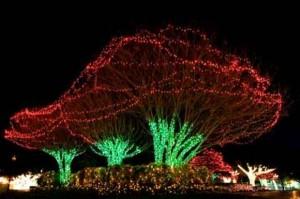 Beautiful Christmas Lights (30 photos) 29