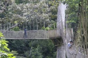 So-called Bridges (40 photos) 29