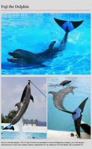 Animal Prosthetics (8 photos) 3
