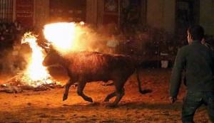 Bizarre Spanish Bull Burning Festival (10 photos) 5