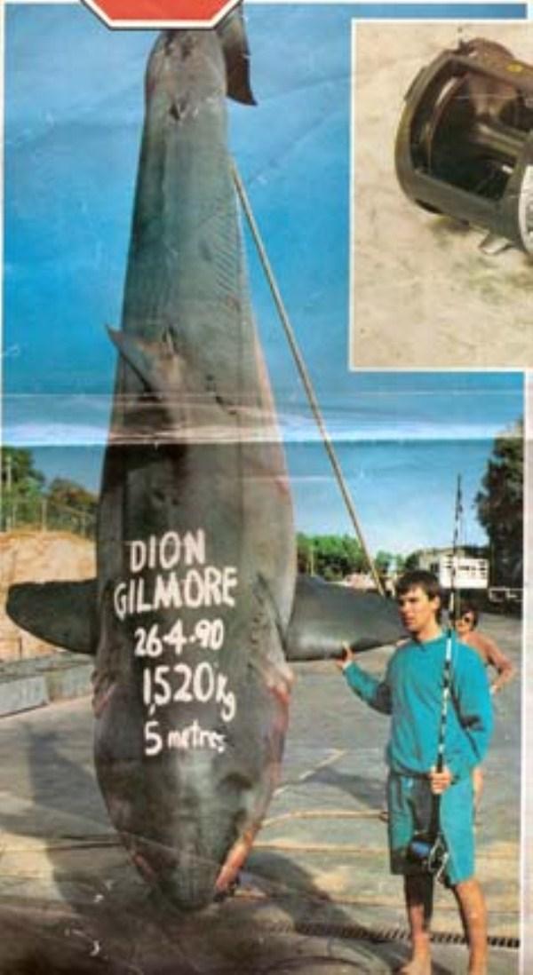 527 Biggest Sharks Ever Caught (8 photos)