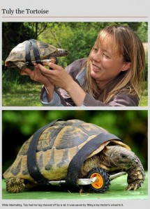 Animal Prosthetics (8 photos) 5