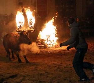 Bizarre Spanish Bull Burning Festival (10 photos) 6