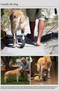 Animal Prosthetics (8 photos) 7