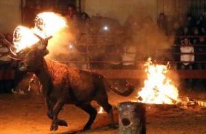 Bizarre Spanish Bull Burning Festival (10 photos) 8