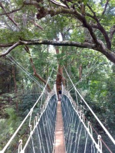 So-called Bridges (40 photos) 9