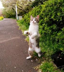 Perfectly Timed Cat Photos (40 photos) 10