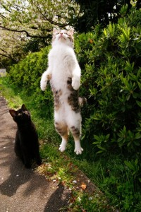 Perfectly Timed Cat Photos (40 photos) 11