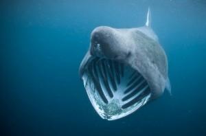 Amazing Underwater World (32 photos) 36