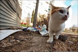 Life in Ukraine (16 photos) 13