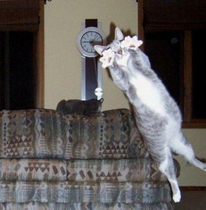 Perfectly Timed Cat Photos (40 photos) 14