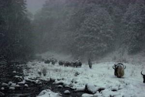 Caravans Of The Himalaya (25 photos) 15