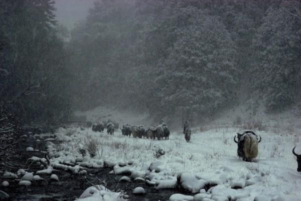 1512 Caravans Of The Himalaya (25 photos)