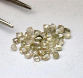 Diamonds in the Jungle (23 photos)