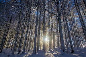 Magnificent Snowy Landscapes (20 photos) 16