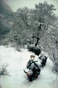 Caravans Of The Himalaya (25 photos) 1