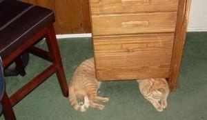 Perfectly Timed Cat Photos (40 photos) 18