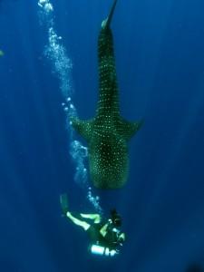 Amazing Underwater World (32 photos) 44