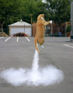 Perfectly Timed Cat Photos (40 photos) 20