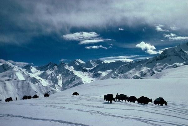 209 Caravans Of The Himalaya (25 photos)