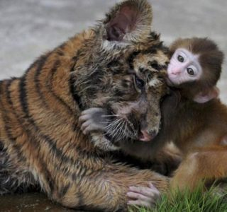 Animal Friendships That May Surprise You (30 photos)