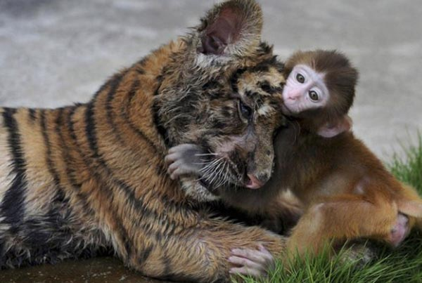 Animal Friendships That May Surprise You (30 photos) 32