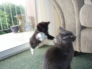Perfectly Timed Cat Photos (40 photos) 2
