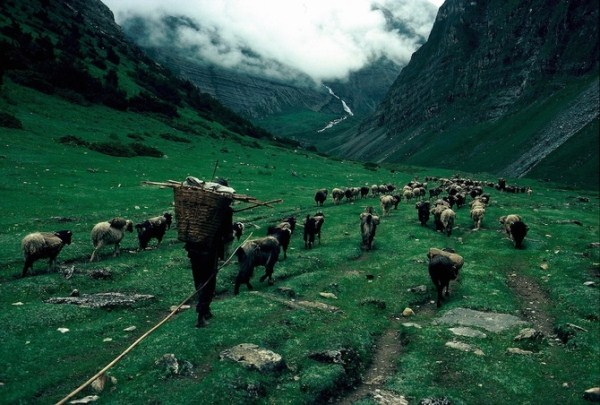 2114 Caravans Of The Himalaya (25 photos)