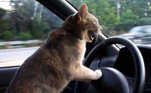 Perfectly Timed Cat Photos (40 photos) 21