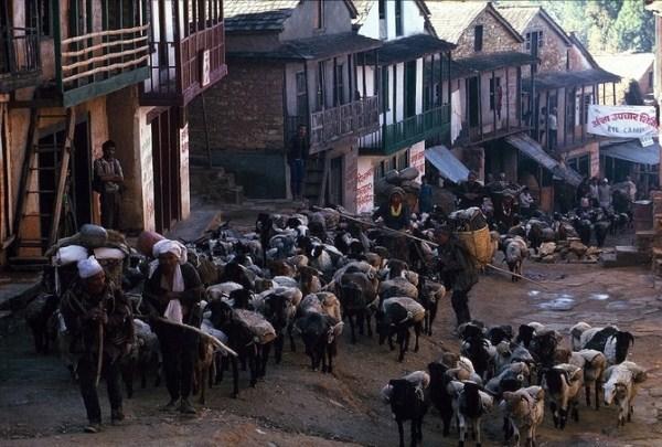 2212 Caravans Of The Himalaya (25 photos)