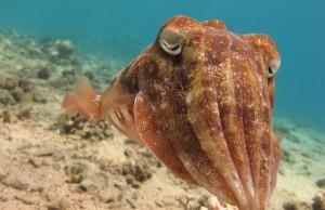 Amazing Underwater World (32 photos) 47