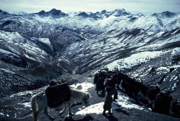 2311 Caravans Of The Himalaya (25 photos)