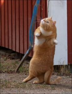 Perfectly Timed Cat Photos (40 photos) 23