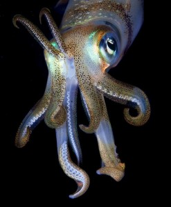Amazing Underwater World (32 photos) 49