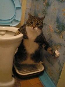 Perfectly Timed Cat Photos (40 photos) 24