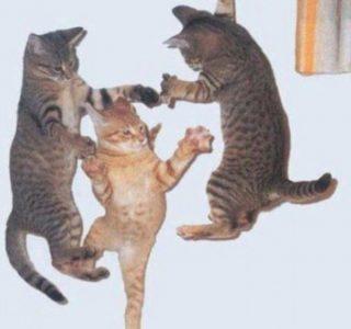 Perfectly Timed Cat Photos (40 photos)