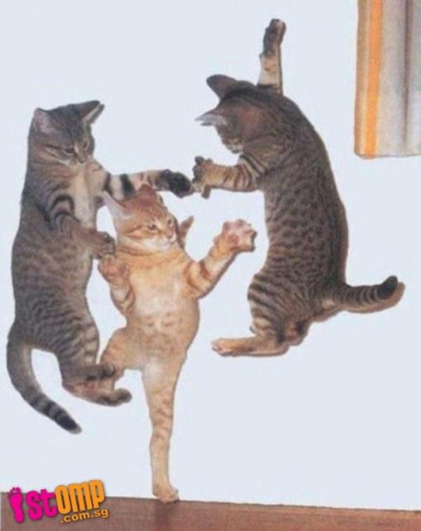 Perfectly Timed Cat Photos (40 photos) 25