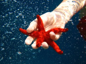 Amazing Underwater World (32 photos) 51