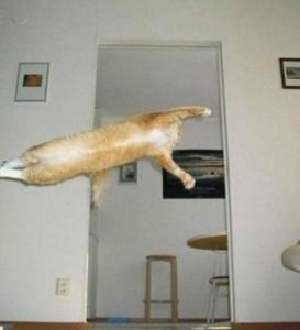 Perfectly Timed Cat Photos (40 photos) 27