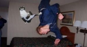 Perfectly Timed Cat Photos (40 photos) 28