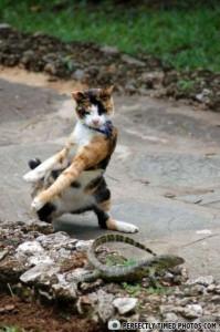Perfectly Timed Cat Photos (40 photos) 29