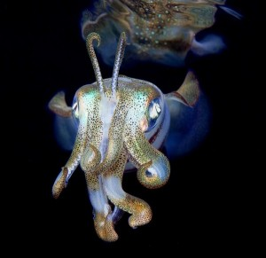 Amazing Underwater World (32 photos) 54