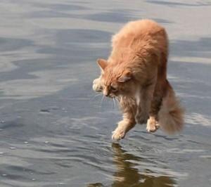 Perfectly Timed Cat Photos (40 photos) 30