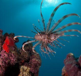Amazing Underwater World (32 photos)