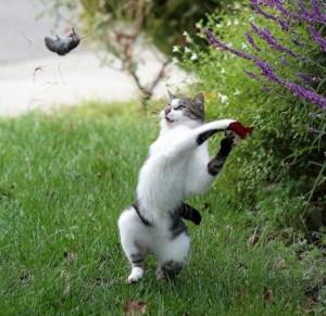 Perfectly Timed Cat Photos (40 photos) 33