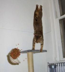 Perfectly Timed Cat Photos (40 photos) 35