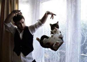 Perfectly Timed Cat Photos (40 photos) 3
